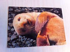 1996 Antarctic Continent Antarctica Fur Seal Postcard Lobo De Dos Pelos Gazella