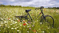 Incorniciato stampa-old bike su un fiore selvatico pascoli (foto poster arte BICICLETTA)