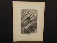 Animate Creation 1885 Hercules-Beetle Engraved Print  !i2#06