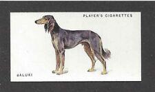 1931 Uk Arthur Wardle Dog Art Full Body Study Player Cigarette Card Grzl Saluki