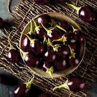 Eggplant 'KABERI' 10 Seeds COMPACT spring vegetable garden aubergine SMALL FRUIT