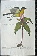 Catesby Seligmann,Chat,Oenanthe Americana pectore luteo,handc.engr.1749,1st ed.