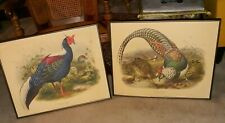TWO Framed Daniel G. Elliott Swinhoe's Pheasant Vintage Lithograph Art Prints