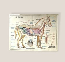 More details for vintage french double sided school poster, biology poster,1960s 91cm x 68cm
