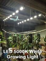 LED 5000k Growing light - Orchid Phalaenopsis Cattleya Cactus Tillandsia aquatic