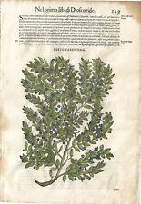 Stampa antica ERBARIO MATTIOLI MATTHIOLI MIRTO botanica 1568 Antique print