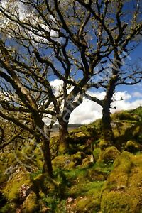 Wistman's Wood Dartmoor Devon Photo Art Print Canvas (UK)