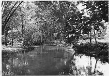 C034 Photo originale vintage Abidjan Côte d'ivoire marais arbres canal