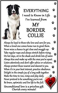 Border Collie (Everything I need to Know in Life) Large Fun flexible Magnet