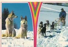 Polarhund * Schlittenhund * Husky * Malamute *  Dog  * Postkarte  *  Postcard 3