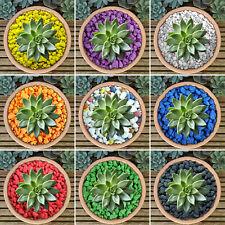 More details for gardenersdream coloured plant pot garden gravel - premium stones for decoration