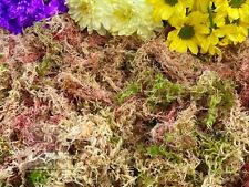 Forest Floor Sphagnum Moss, 100% Natural and Freshly Hand Picked, Snails, Frogs