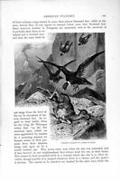 Original Old Antique Print Natural History 1895 Condors Guanaco Vultures Birds