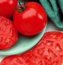Manalucie Tomato - 20 Seeds - Disease Resistant