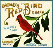 Highgrove Red Bird Cardinal Orange Citrus Fruit Crate Label Art Print