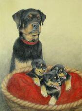 Original Pastel Drawing Rottwieler Dog & Cute Puppies Sally Porter Art Guard Dog