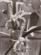 AK Motiv Orchidee