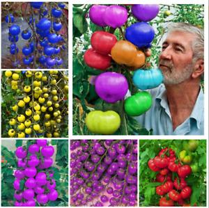 Rainbow Tomato Seeds Tomatoes Vegetable Fruit Seed Rare Rainbow Seeds UK Seller