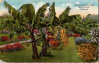 Vintage C. 1919 Banana Tree Fruit Lush Garden Covina California Marked Postcard