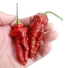 BIG BANG Cioccolato Naga Chilli Pepper Seeds X 5-liveseeds