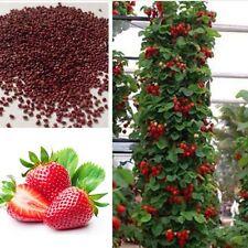100pcs rote Erdbeere Klettern Erdbeer Samen Klettererdbeeren Hänge Erdbeere Red