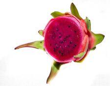 10 Cereus pitaya SEMI SEEDS frutto del dragone FRUTTA ESOTICA BIO cactus
