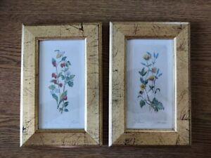 Quadri piccoli di incisioni inglesi acquerellate a mano, fiori firmati, rari [3]