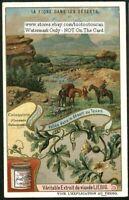 Texas Cactus Succulent Desert Flower Plant c1909 Trade Ad Card