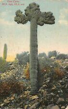 C6311 Giant Cactus 30 Ft. High 10 Ft. Arm Desert Southwest - Antique Postcard