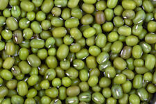 1000 Organic Mung Bean Seeds for Sprouting Fresh Non GMO seeds