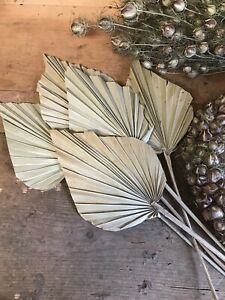 5 Natural Dried Palm Spears, Dried Flower 🌾Boho Decor 🌿Seconds  🌸Boxed