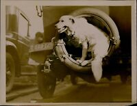 GA70 Original Underwood Photo NO WONDER DOG WANTS TO RIDE Hungarian Komonder