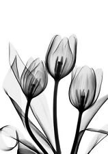 Modern Black & White Tulips Flowers Fine Art Canvas Print