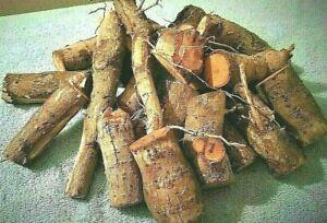 1 LB. Sassafras WHOLE Roots FRESH * Natural * Hand Dug  FREE SHIPPING!
