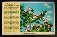 Antique Postcard~ Greetings From Florida~ Legend Of The Bleeding Heart Dove~P963