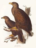 ROF03 Nuremberg´s Eagle with Stand for King /& Country LAH Berlin38 1//30