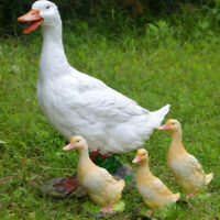 Duck Garden Ornament Resin Patio Pond Sculpture Farm Animal Statues Lawn
