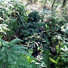 3D Camo Camouflage Jagd Woodland Tarnanzug Tactical Ghillie Suit Abdeckung Yowie