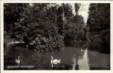 Badenweiler 1942 Markgräflerland Schwarzwald Schwanenteich Teich Gewässer Schwan