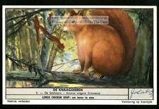 The Squirrel Sciurus vulgaris 50 Y/O Trade Ad Card