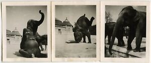 ELEPHANTS DOING TRICKS IN A ZOO ANIMALS VINTAGE SNAPSHOT PHOTOS
