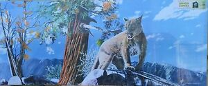 """Puma In A Tree 48"""" x 20"""" Canvas print on a wooden stretcher frame, slight damage"""