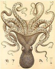 Victorian Octopus Art Print 8 x 10 - Haeckel - Nautical - Sea Creature - Ocean