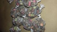 15 std. pre filled bait balls trial pack filled with fast & long melt pellets