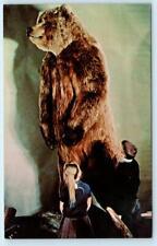 FAIRBANKS, AK  University of Alaska Museum ALASKAN BROWN BEAR Taxidermy Postcard