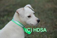 "Dog Collar - 3/4"" Reflective - Terrier, Whippet, Puppy, Pet- Hi Vis Neon Green"