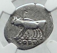 TITUS as Caesar under Vespasian Ancient Silver Roman Coin YOKE OXEN NGC i81464