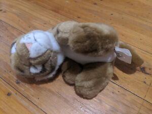 Sleeping Plush Tiger Cub Toy 22cm Dream World Australia Gold Coast