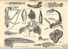 1885= PREISTORIA= FOSSILI GIURASSICO = Stampa Antica = Old Engraving