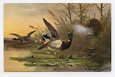 Chasse aux canards .  Hunting ducks .  Entenjagd   . a/s MÜLLER